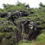 Tree...or trees?